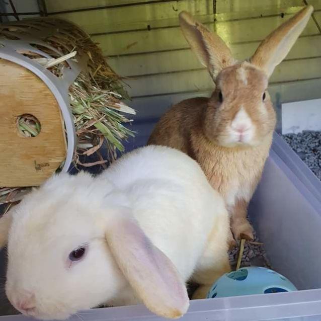 Photo of Finn & Bailey + Holly