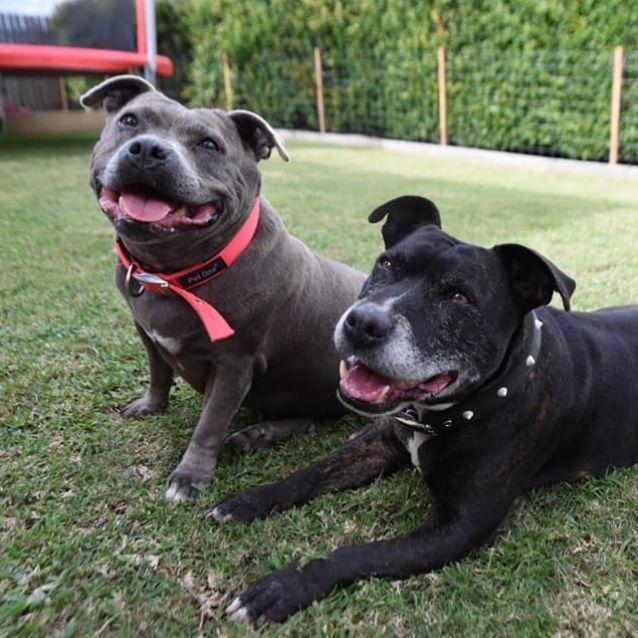 Photo of Max & Molly