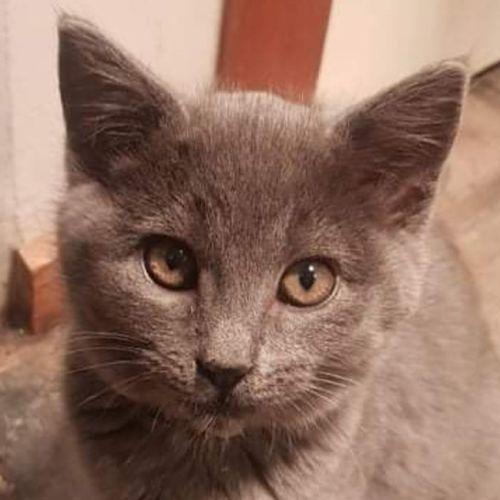 Mayella **2nd Chance Cat Rescue**