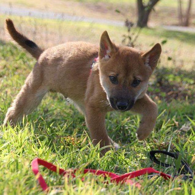 Photo of Zeta Dingo