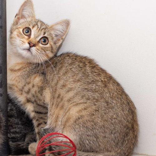 Kelly **2nd Chance Cat Rescue **