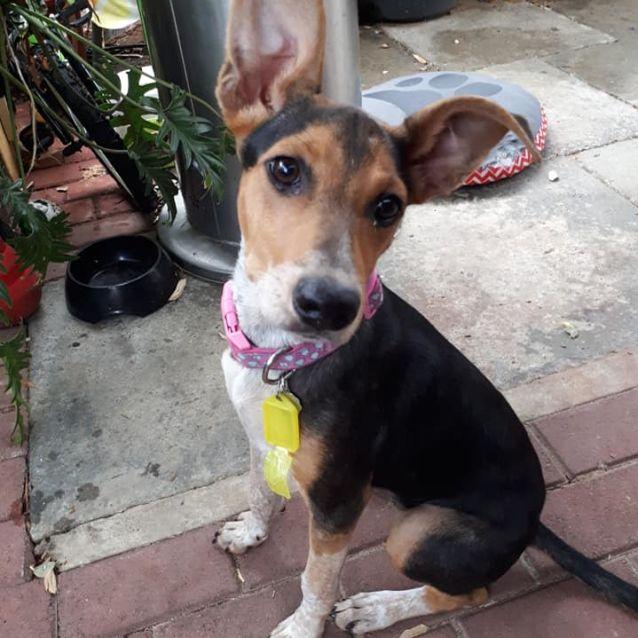 Photo of Puppy Queenie Dl2391