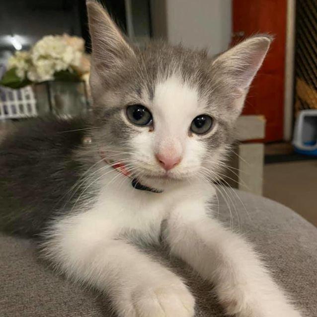 Photo of Puka
