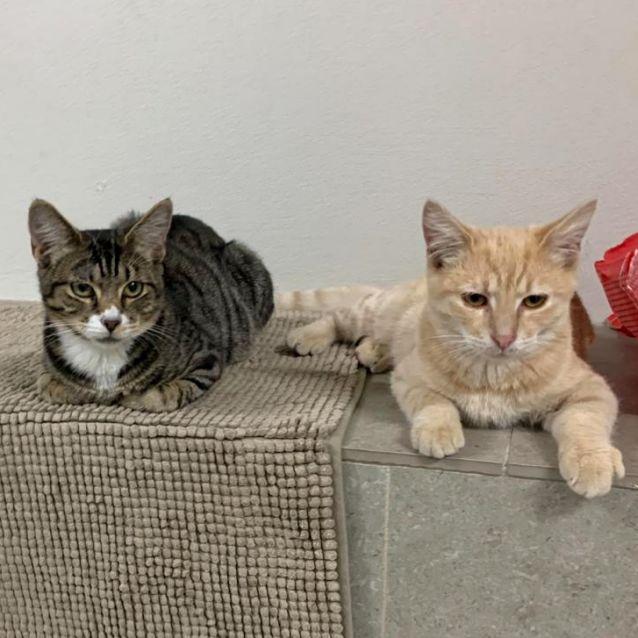 Photo of Choccy & Cheddar