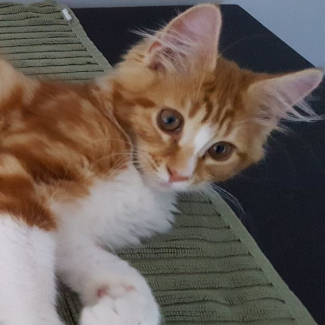 Photo of Rocky ^^Dandy Cat Rescue^^