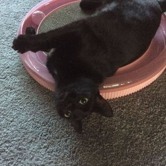 Cate $200. Available to Foster
