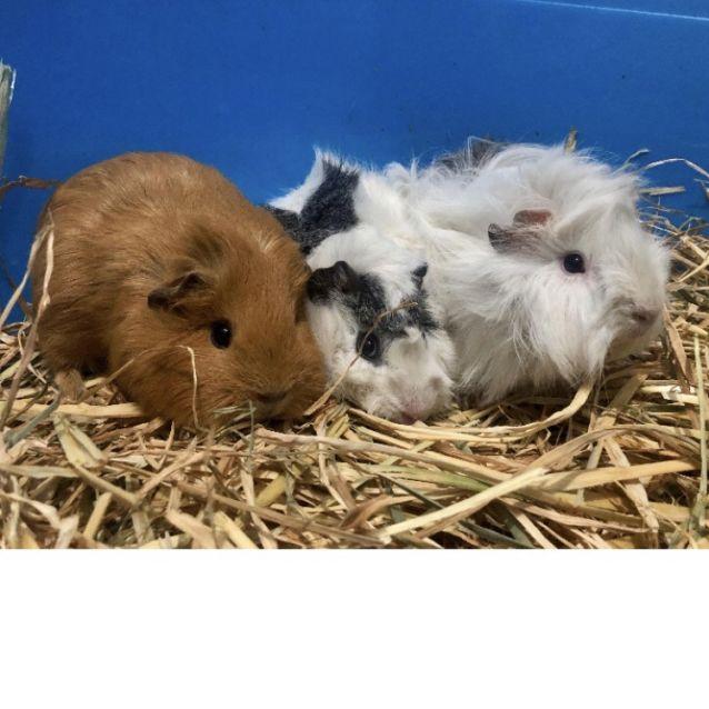 Photo of Sissi, Sadie And Blanca