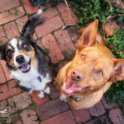 Rudy & Sky Skarsgard - Koolie Dog