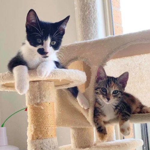 Jasmine & Wally ❤❤ - Domestic Short Hair Cat
