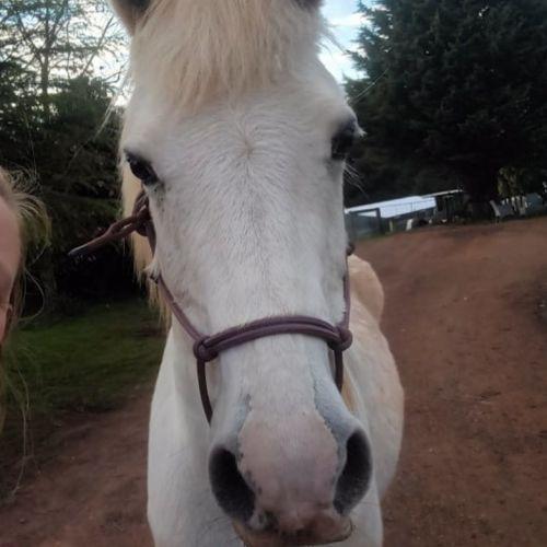 Angel - Sweet shy pony