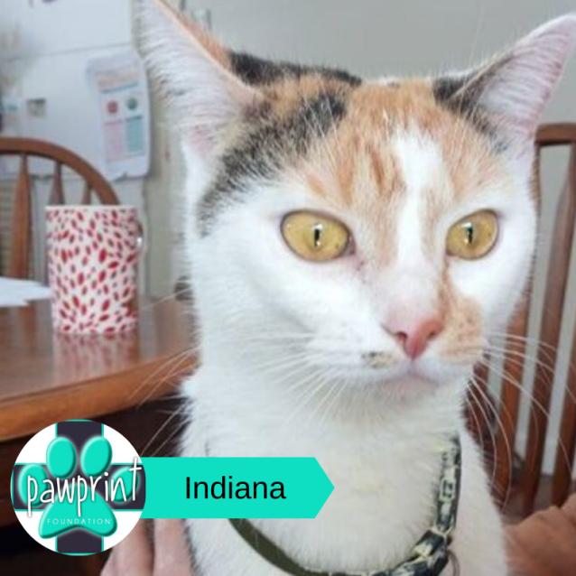 Photo of Indiana