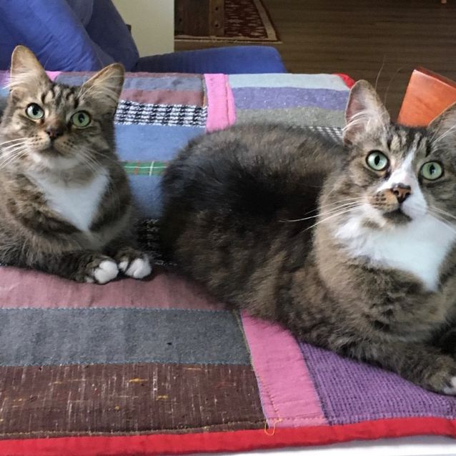 Photo of Mikey & Monroe