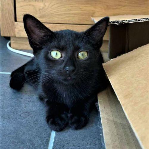 Graphite ^^Dandy Cat Rescue^^
