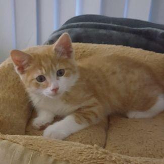 TJ ^^Dandy Cat Rescue