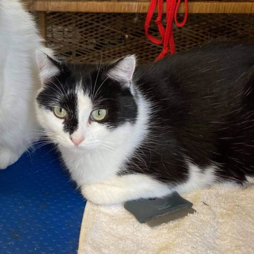 Gary (bonded with Daryl - all white)