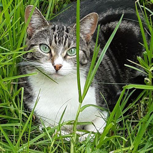 Jade ^^Dandy Cat Rescue^^