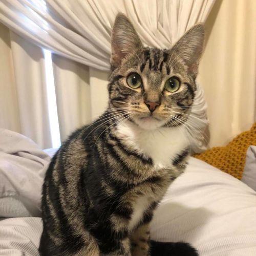 Johnathon **2nd Chance Cat Rescue**