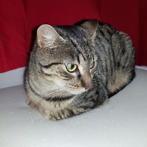 Petal **2nd Chance Cat Rescue**