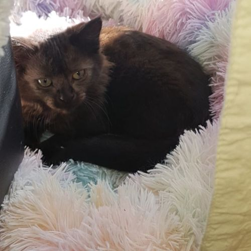Zinah **2nd Chance Cat Rescue**