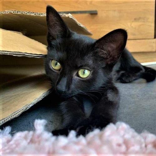 Widow ^^Dandy Cat Rescue^^