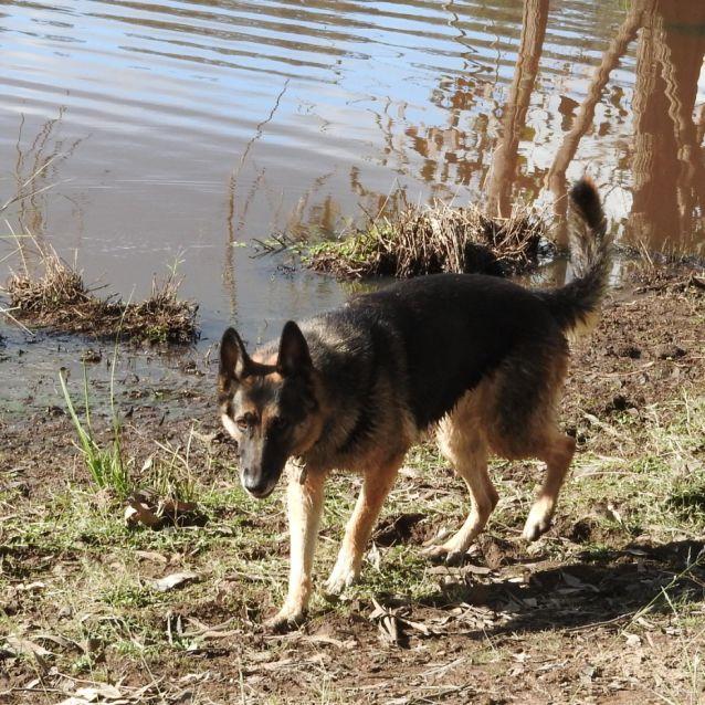 Photo of Chardie