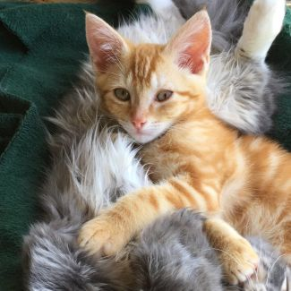 Macca ^^Dandy Cat Rescue^^