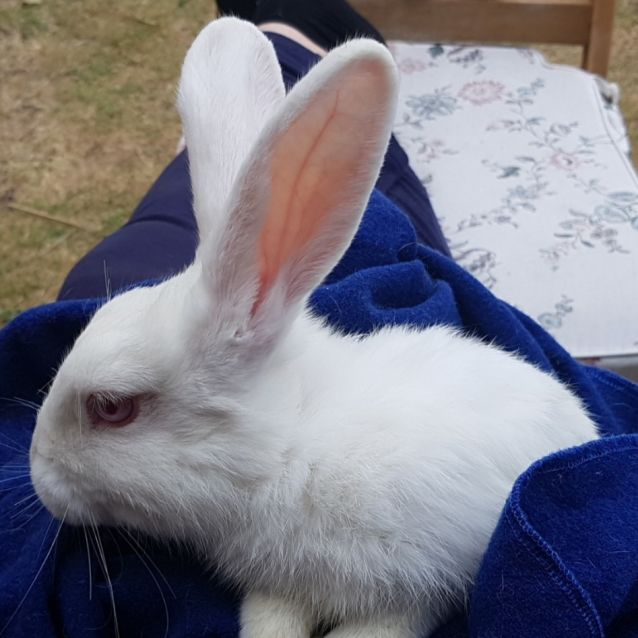 Photo of Yuki * On Trial With My New Family *