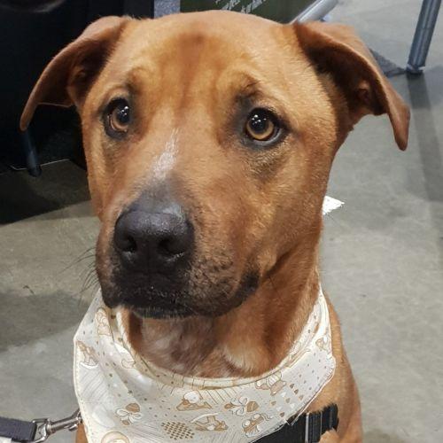 Rynie - Cross breed Dog