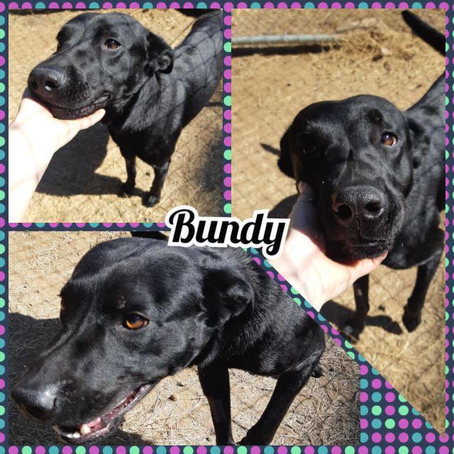 Photo of Bundy