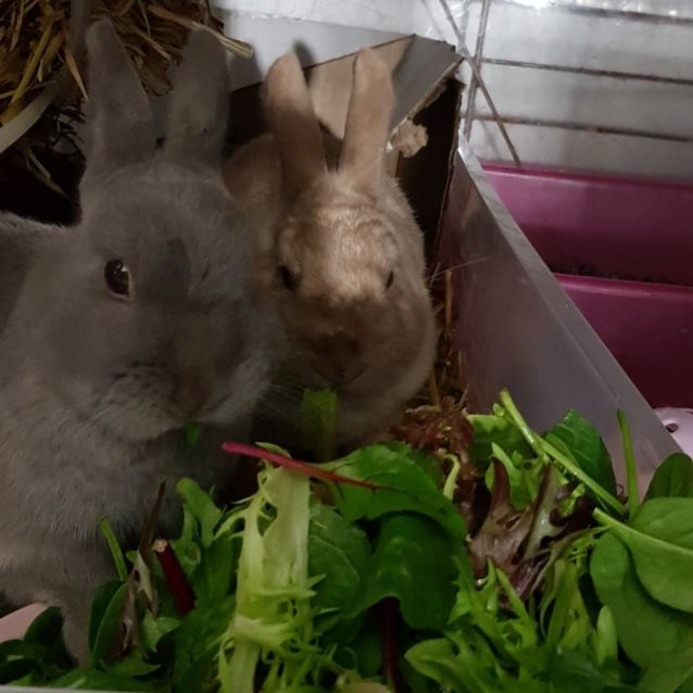 Photo of April & Monti