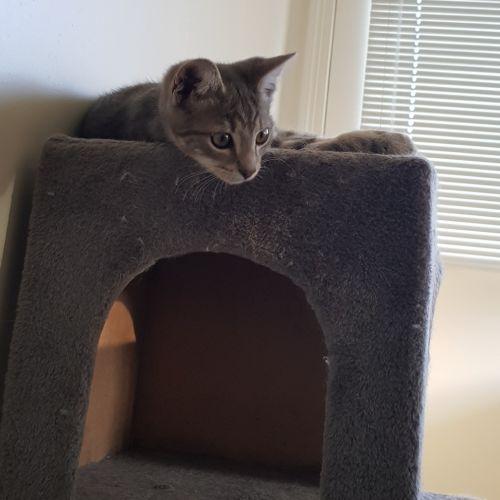 Steve Backshall - Domestic Short Hair Cat