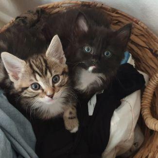 Penny & Leonard