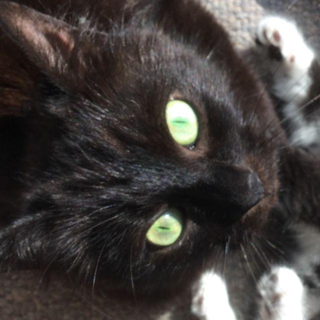 Photo of Sonny