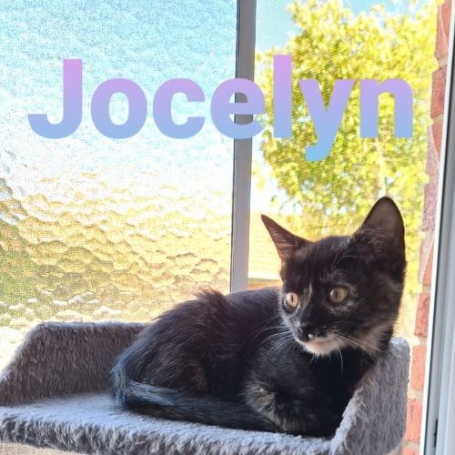 Jocelyn **2nd Chance Cat Rescue**