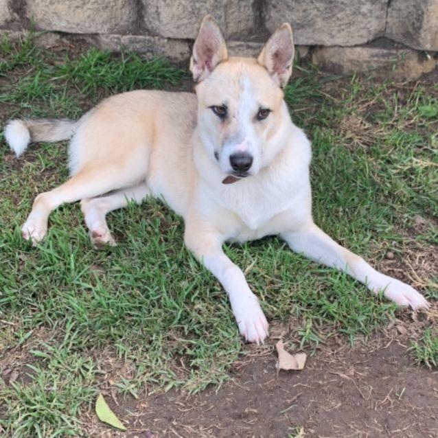 Photo of Kira  Needs A Dog Friend