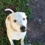 Photo of Suki (Adoption Pending)