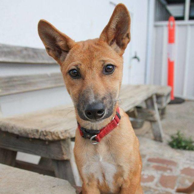 Photo of Nova Dingo