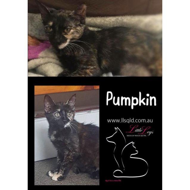Photo of Pumpkin