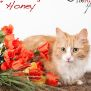 Photo of Honey