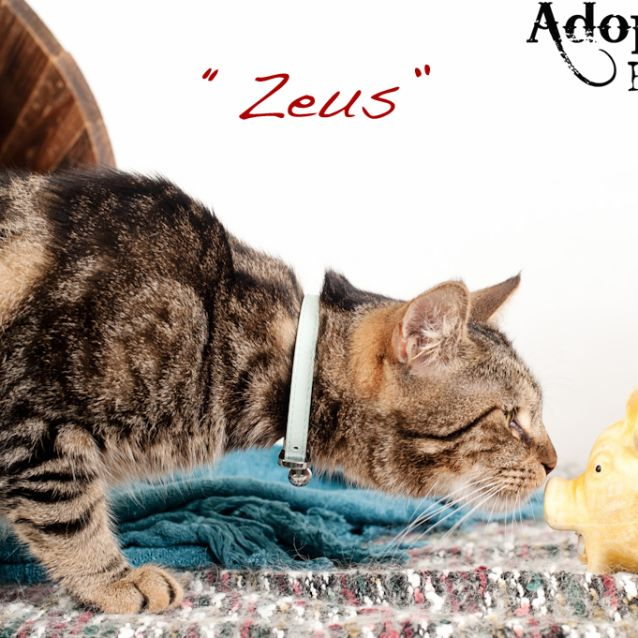Photo of Zeus