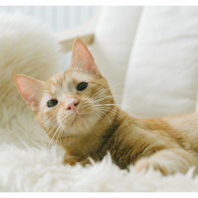 Photo of Tigger