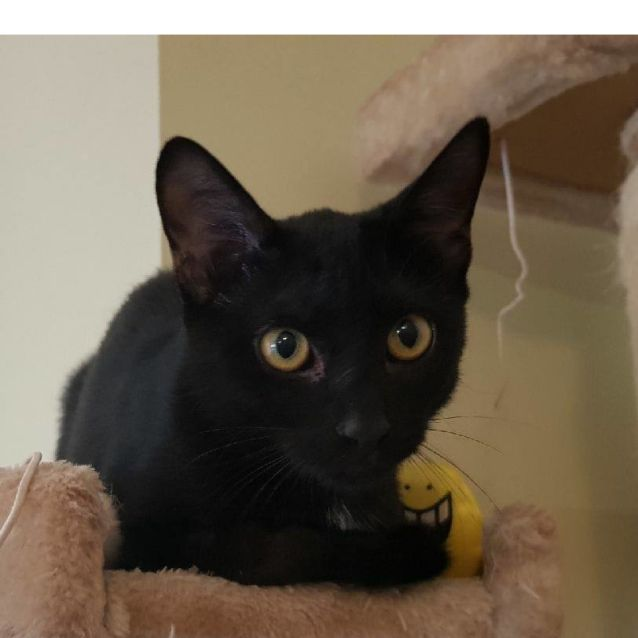 Photo of Eclipse (Nc594) *Adoption Pending