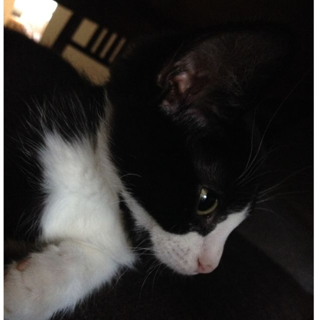 Photo of Jelly Bean **2nd Chance Cat Rescue**