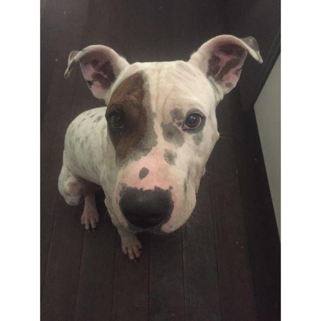 Photo of Hank    Adoption Pending!