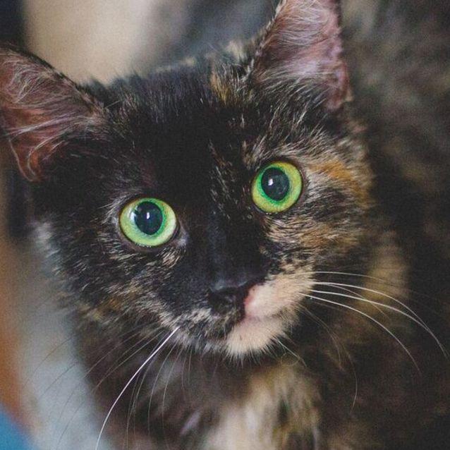 Photo of Tyga. Stunning Eyes And Personality To Match!