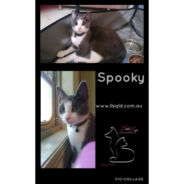 Photo of Spooky