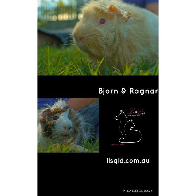 Photo of Bjorn & Ragnar
