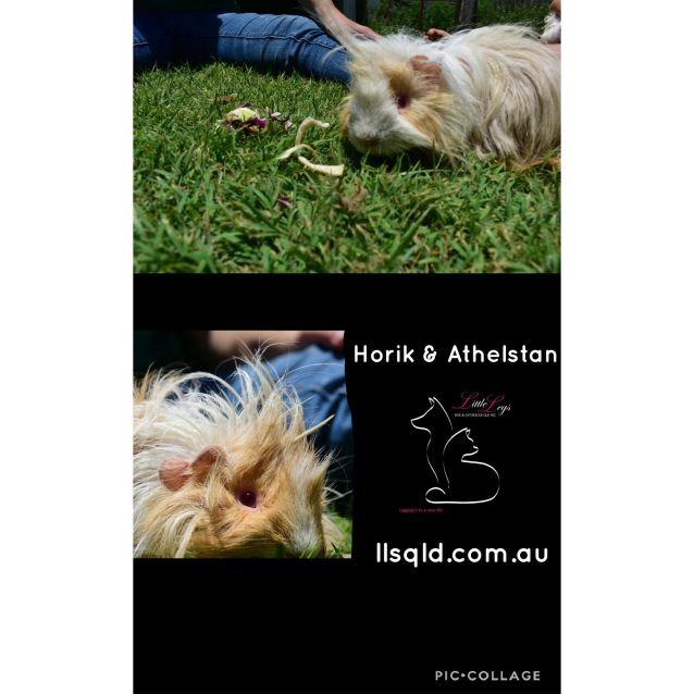 Photo of Athelstan & Horik