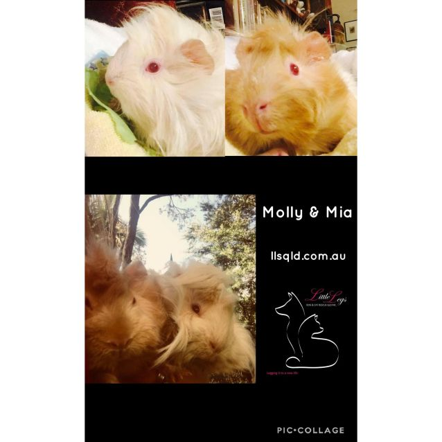 Photo of Molly And Mia