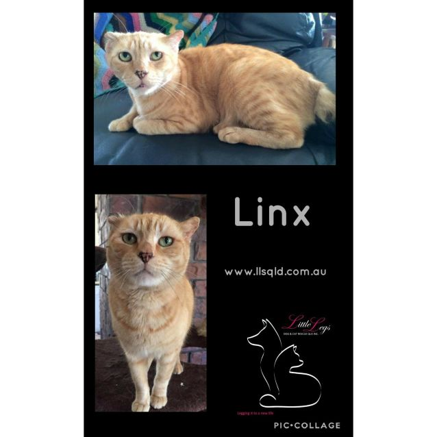 Photo of Linx